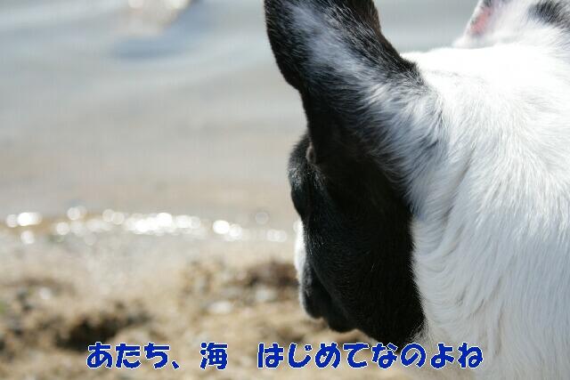 c0092350_1837379.jpg