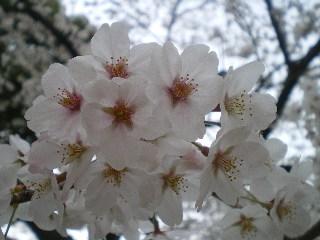 不覚_c0118352_536920.jpg