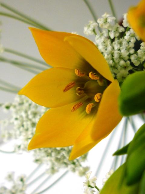 春のさしいれ…_b0093660_0501110.jpg