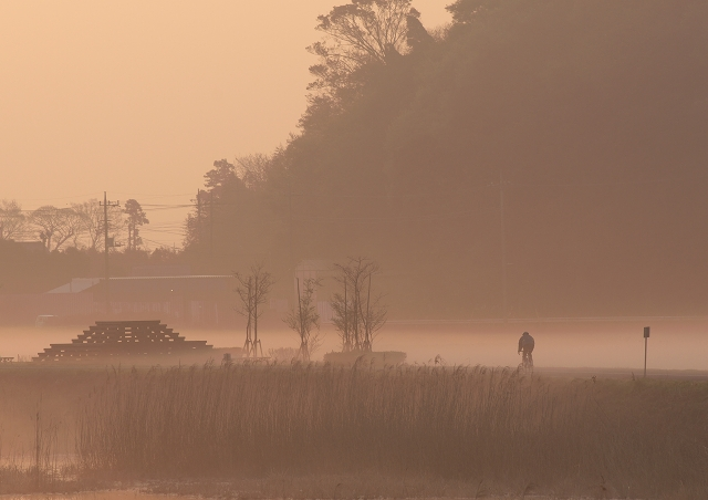 蓮沼の朝 2_f0018464_19511762.jpg