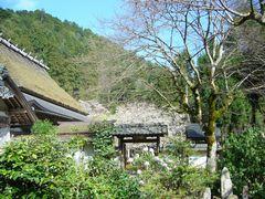 櫻狂い(3) ~かくれ里の櫻・常照皇寺~_b0102572_0282118.jpg