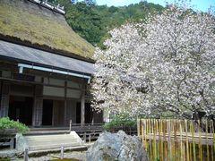 櫻狂い(3) ~かくれ里の櫻・常照皇寺~_b0102572_0553992.jpg