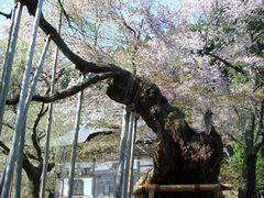 櫻狂い(3) ~かくれ里の櫻・常照皇寺~_b0102572_0572147.jpg