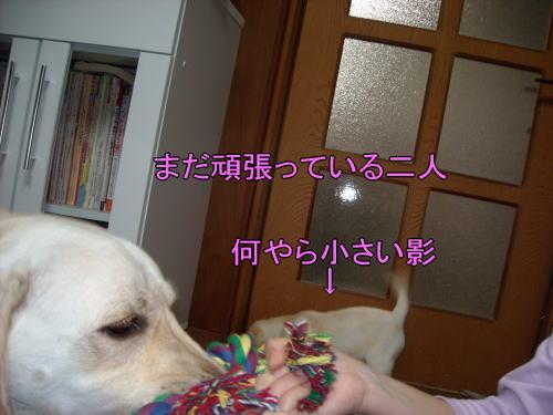 b0136683_1201693.jpg