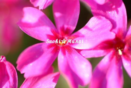 c0073387_1181864.jpg