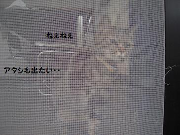 c0139488_06077.jpg