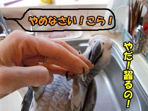 c0133013_1435979.jpg