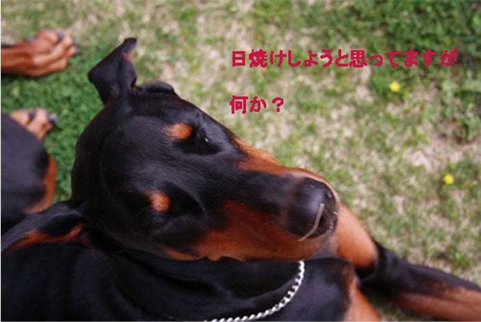b0079523_8404681.jpg