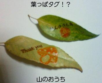 f0085327_219315.jpg