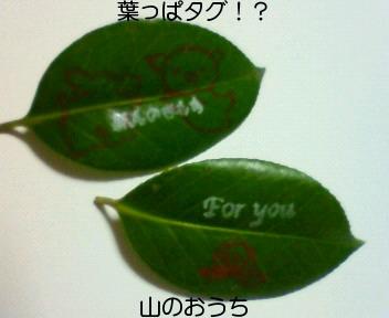 f0085327_2195475.jpg