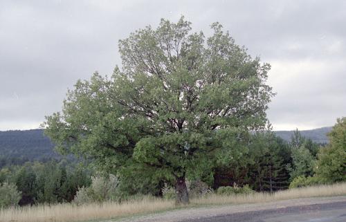 男はどこに木を植えた?_c0177135_21235791.jpg