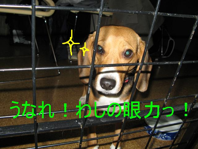 c0129346_0114995.jpg