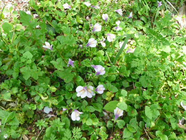 野の花♪_f0099147_21371788.jpg