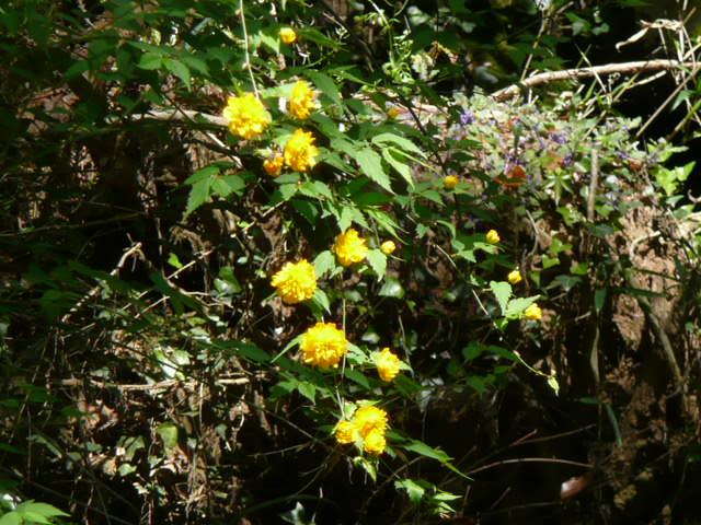野の花♪_f0099147_21404899.jpg
