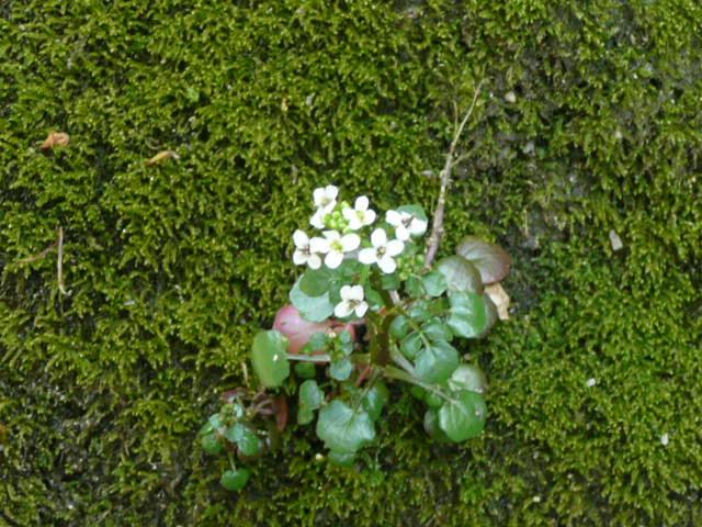 野の花♪_f0099147_21425265.jpg