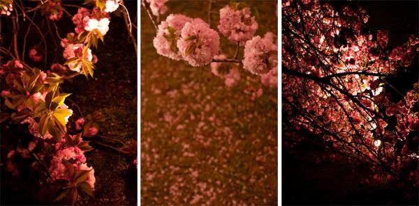 浜離宮 八重桜ライトアップ 2009_a0003650_14225179.jpg