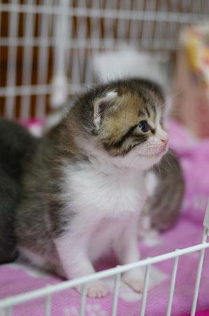 13日の子猫_a0064067_221136.jpg