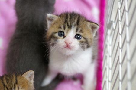 13日の子猫_a0064067_2211774.jpg