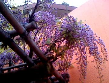 こんなに咲いてる_e0095468_032450.jpg