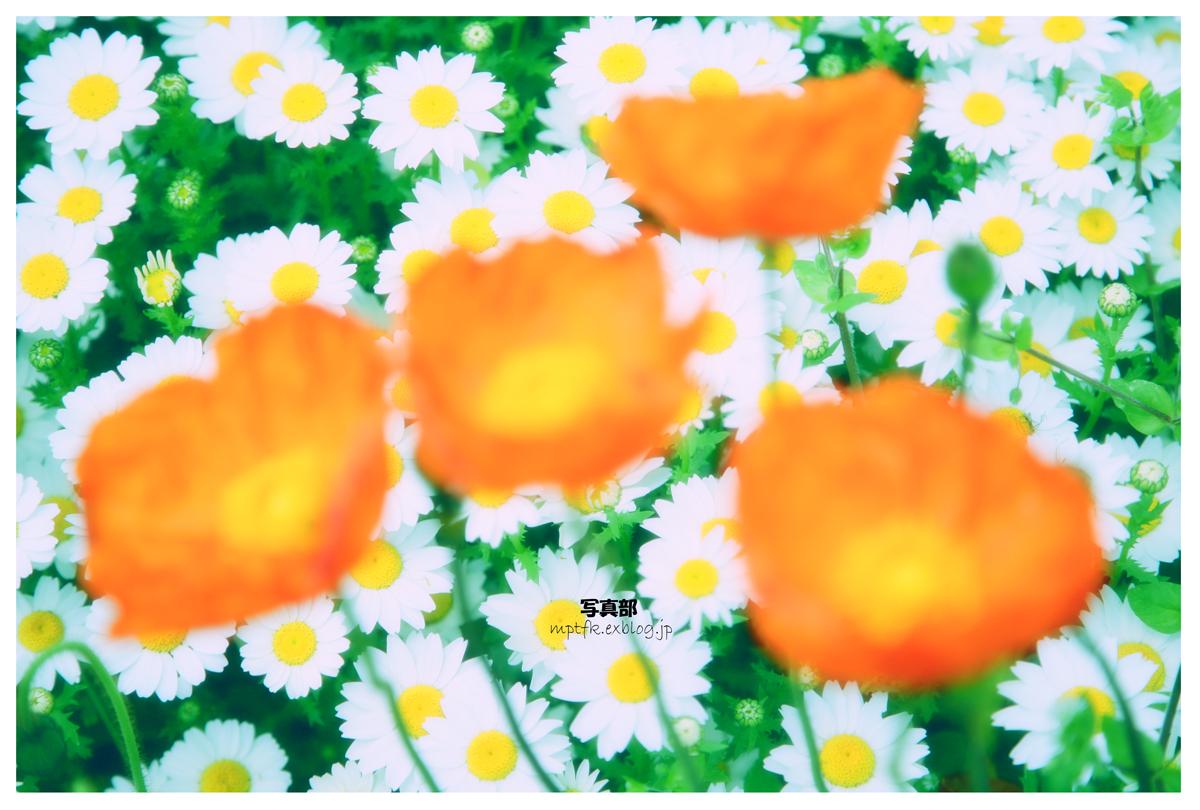 flowers_f0021869_1351568.jpg