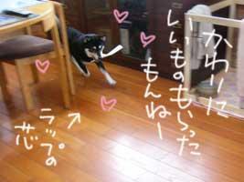 b0057675_202576.jpg