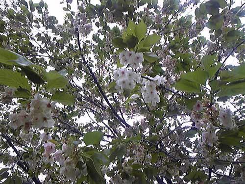 雑記 133 寒くても春ですね_d0016587_17591841.jpg