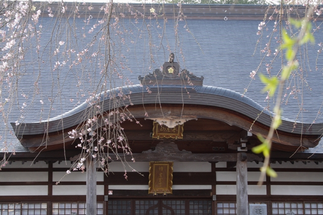 神宮寺の桜_f0091207_2247042.jpg