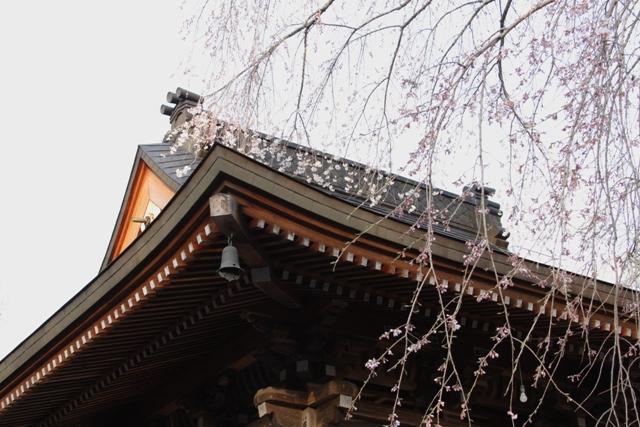 神宮寺の桜_f0091207_23181591.jpg