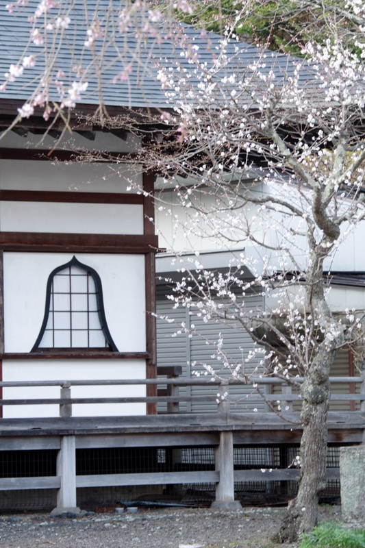 神宮寺の桜_f0091207_23233029.jpg