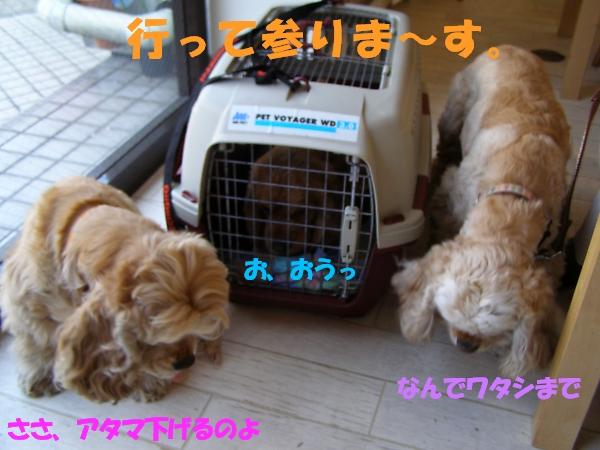b0067012_54154.jpg
