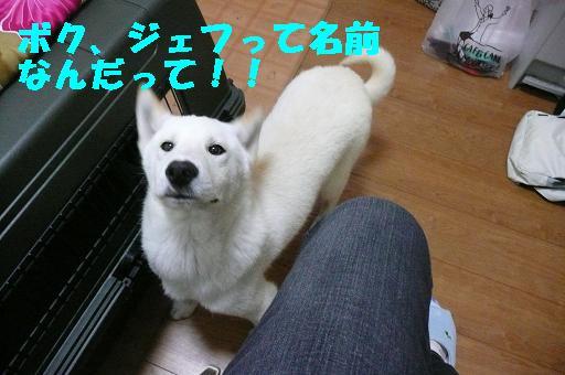 f0121712_0255076.jpg