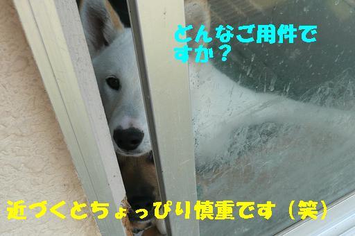 f0121712_0323882.jpg