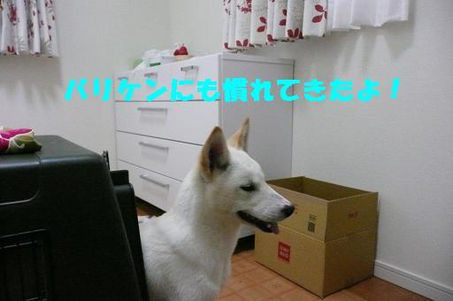 f0121712_0375976.jpg