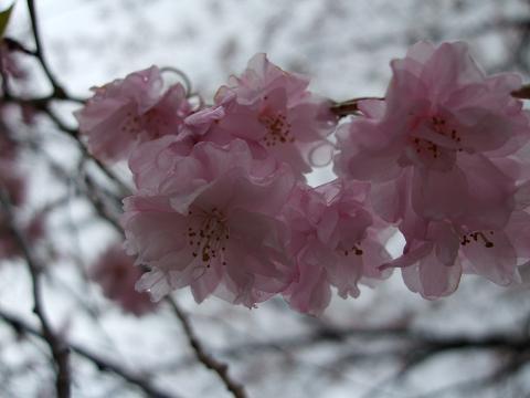 お花見旅行「一條旅館」へ行きました。_e0012815_23435815.jpg
