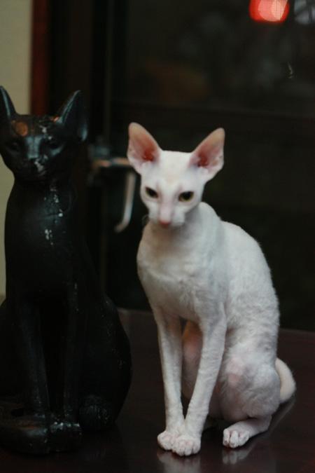 エジプトの猫神_e0048332_21274848.jpg