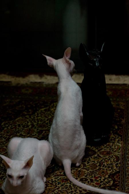 エジプトの猫神_e0048332_21514234.jpg