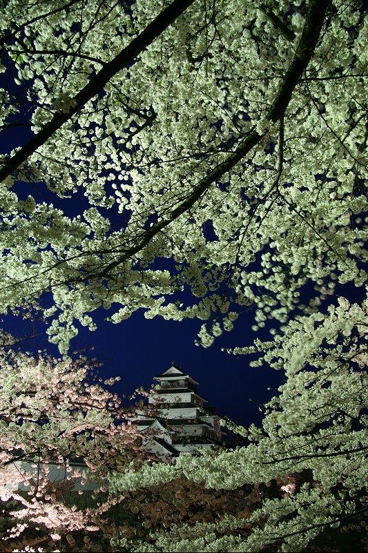 速報!鶴ヶ城のライトアップ_f0048546_22443373.jpg