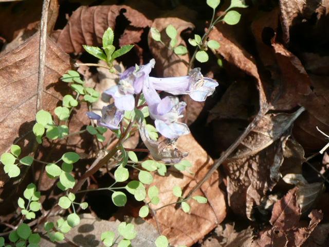 標高 約800メートルの山を歩いて、野の花を愛でました♪_f0099147_23554655.jpg
