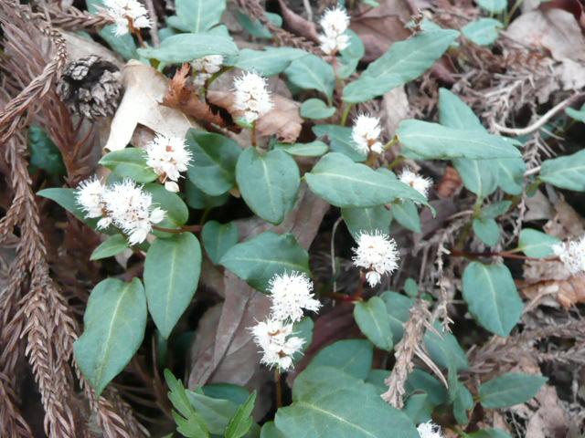 標高 約800メートルの山を歩いて、野の花を愛でました♪_f0099147_23583556.jpg
