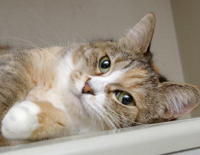 プーちゃんが冷蔵庫の上で寝ておりました・・・_a0028451_2058297.jpg