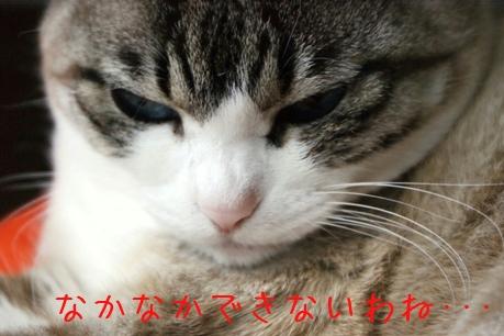 f0190851_15671.jpg