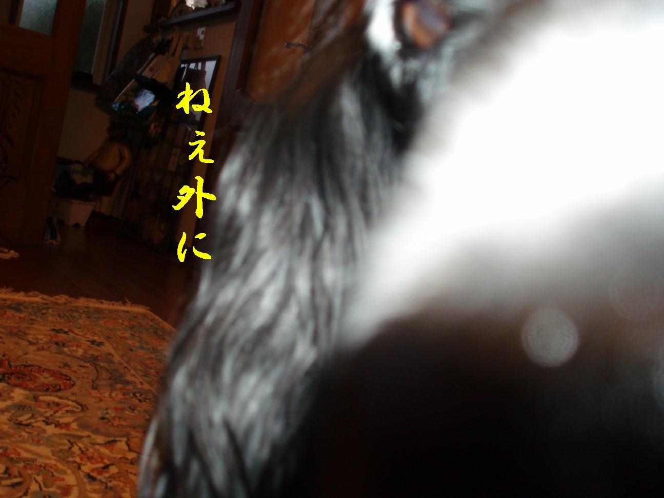 f0136555_1839494.jpg