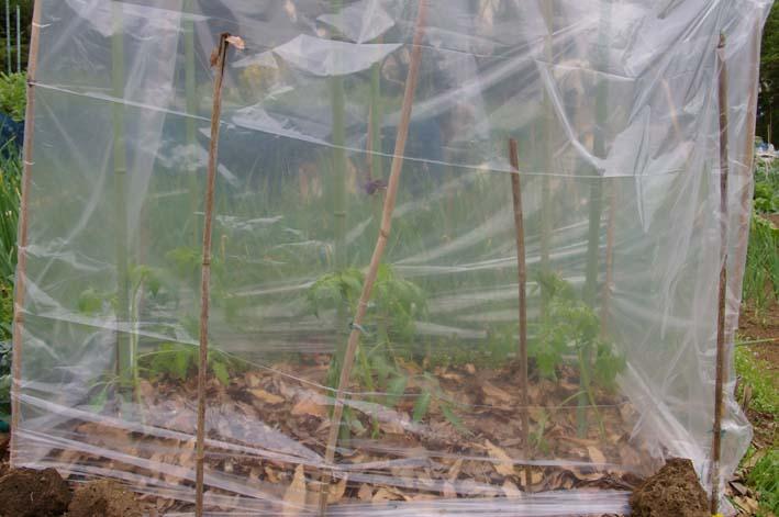 夏野菜の第一陣の植え付け完了!(2009・4・18)_c0014967_16172922.jpg