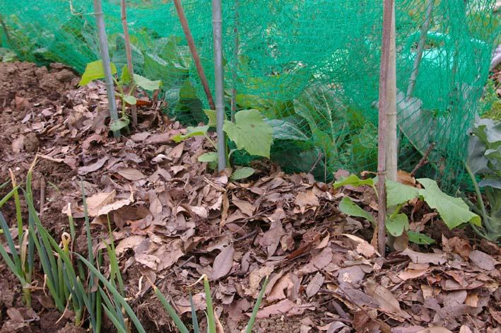 夏野菜の第一陣の植え付け完了!(2009・4・18)_c0014967_16175420.jpg