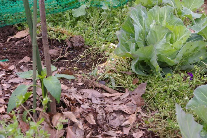 夏野菜の第一陣の植え付け完了!(2009・4・18)_c0014967_1618761.jpg