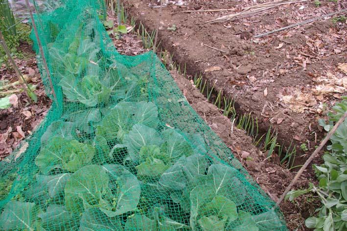 夏野菜の第一陣の植え付け完了!(2009・4・18)_c0014967_1620076.jpg