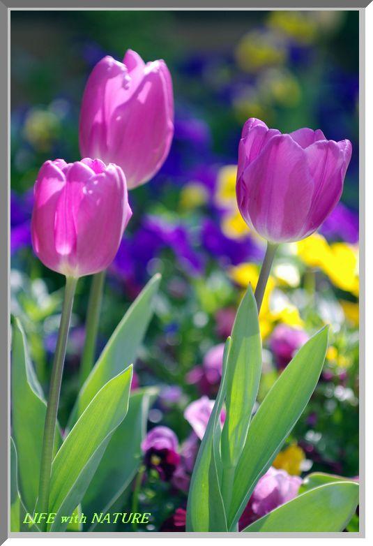 我が家の春 16_b0093088_10514113.jpg