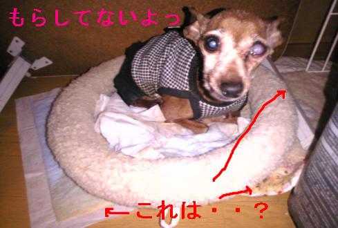 f0123589_13383887.jpg
