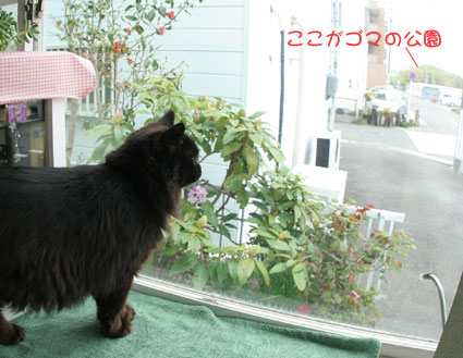 ぶちゃいくスミレちゃん♪_d0071596_15255411.jpg