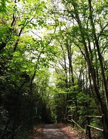 GR DIGITALⅡと多摩湖&狭山湖・新緑の30km走_d0122797_2124354.jpg